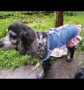 Одежда для собаки (б/у)