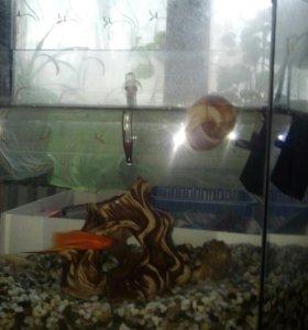 Рыбка с аквариумом и компрессором