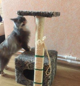 Домик для кошки, когтеточка в подарок