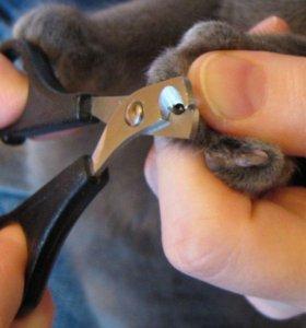 Процедуры для кошек и собак