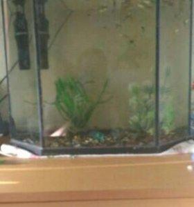 Аквариум эркером с рыбками