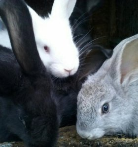 Кролики, 4 месяца