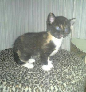 Котенок девочка 1 месяц