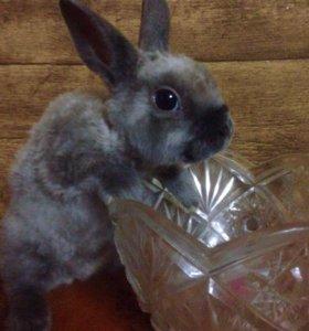 Крольчонок Домашний Плюшевый