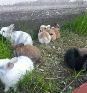 Мини крольчата