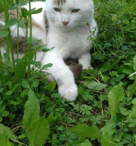 Кот Каспер.