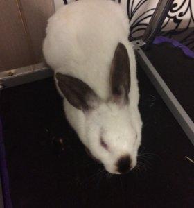 Продаю кроликов породы рекс