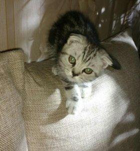 Кошечка ищет хозяина