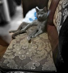 Срочно Вязка кот