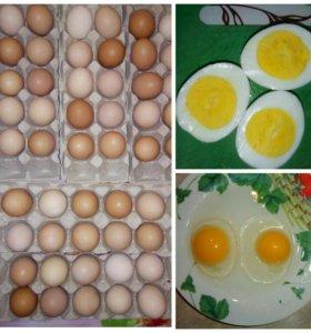 Свежие домашние яйца