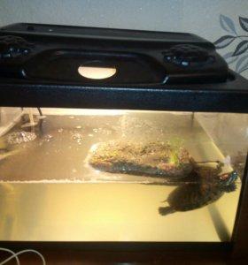 Черепа с аквариумом