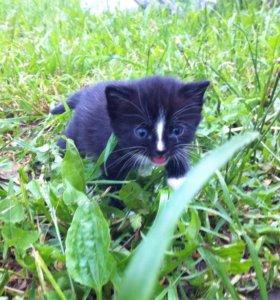 Отдам ласковых, пушистых чёрных котят