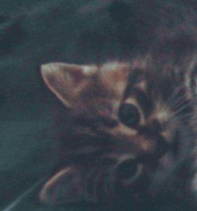 Котенок мальчик трех цветный