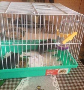 два крысеныша с клеткой