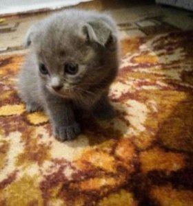 Продаются котята,родились 9мая