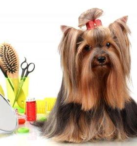 Груминг (стрижка) декоративных собак в Токсово