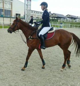 Аренда лошадей и обучение верховой езде