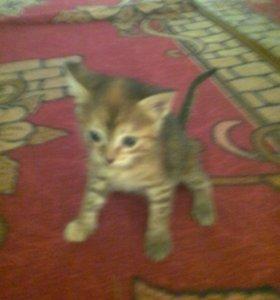 Котята, 2 кота и 2 кошки
