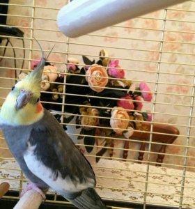 Говорящий попугай Кеша.