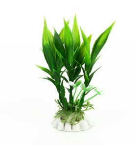 Новое растение для аквариума