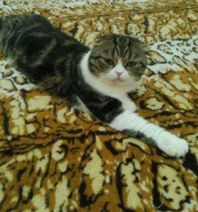 Котик для вяски