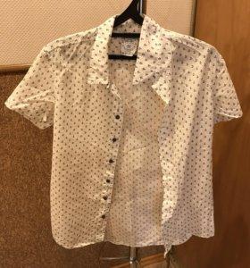 Две Мужские Рубашки Calliope