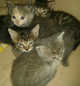 Котята - мальчики