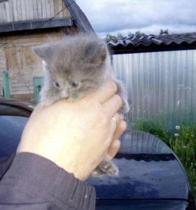 Милое созданье))