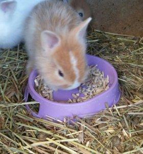 Крольчата карлики