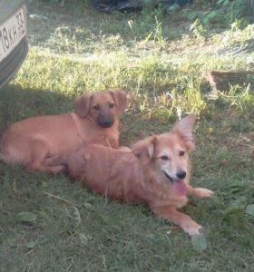 Собачки (9-10 месяцев)