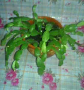 Продам растения