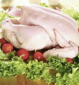 Мясо домашней курицы(бройлера)