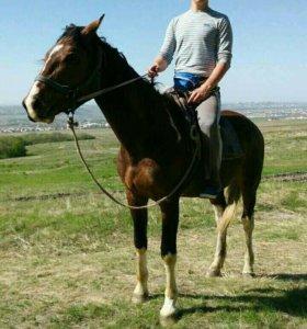 Конные прогулки обучение езде верхом