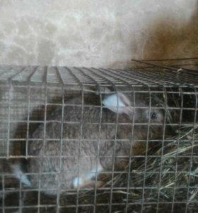 Продам кроликов 6 месяцев.