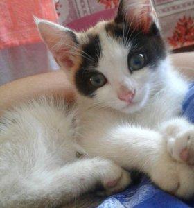 Отдам Котёнка в заботливые руки