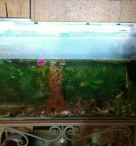 Рыбки с аквариумом в сборе