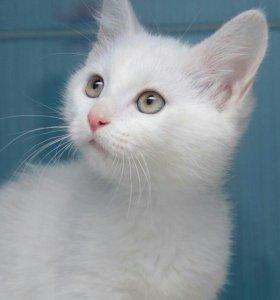 Белый котенок Комок