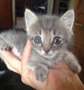 Кошечка в добрые руки..