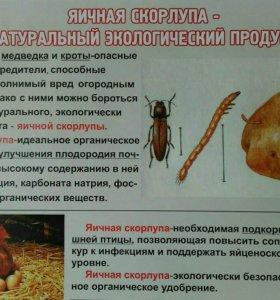 Скорлупа яичная
