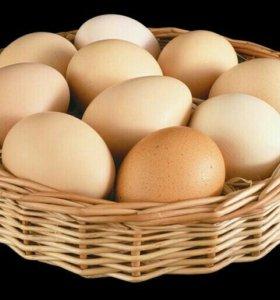 Яйца куриные, домашние