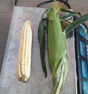 Кукуруза супер сладкая оптом.