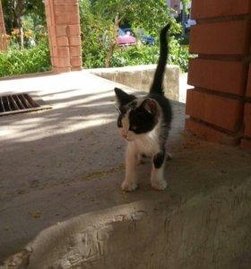 Котик Добрым хозяевам