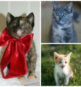 Котятки девчулечки