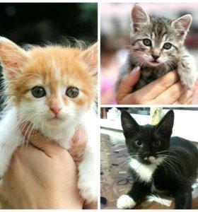 Котятки мальчулечки