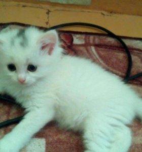 Продам котенка девочку,2 месяца