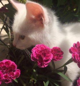 Белая кошечка (Котенок)