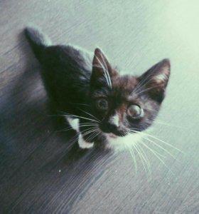 Кошка, кот, котёнок