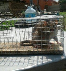 Крысоловка для крыс и мышей.