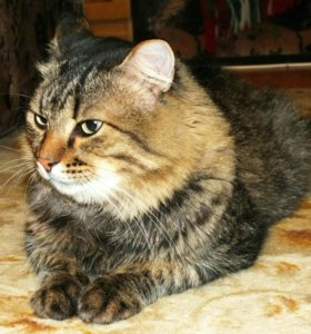 Котик ВАСИК