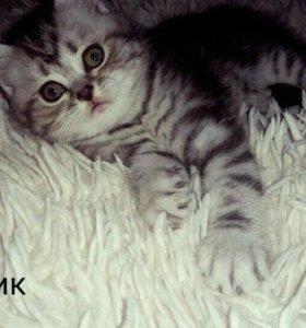 Продам Котёнка.